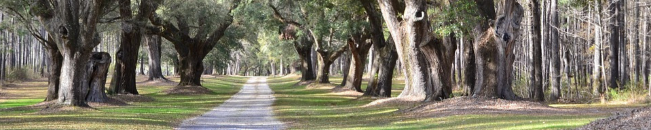 Top Rated Chiropractor in Bluffton, SC