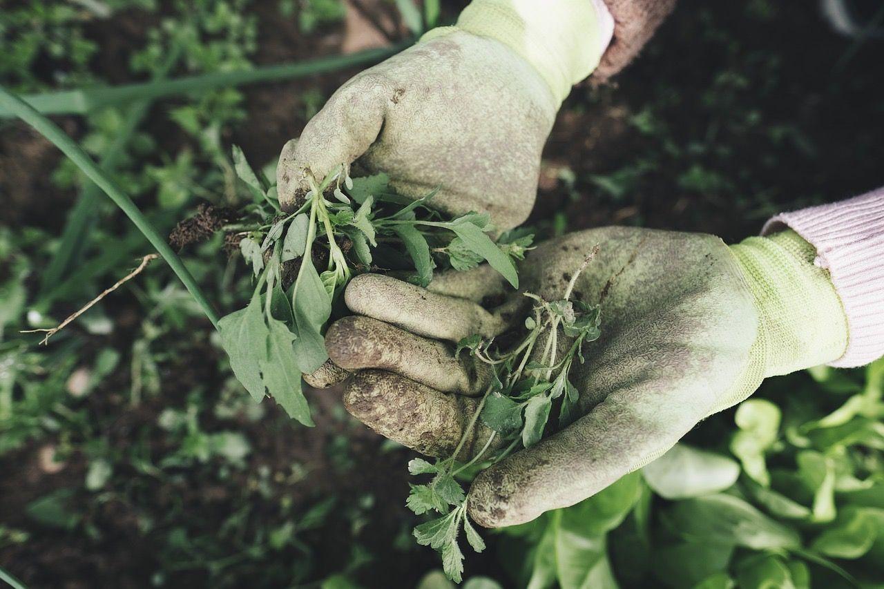 Grow your garden!