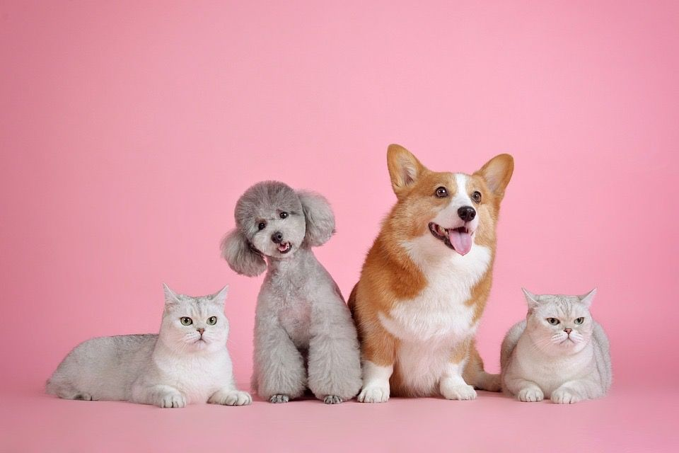 Pets become playmates while social distancing.